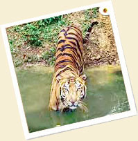 Bandipur National Park Tour Package in India