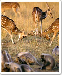 Bandhavgarh National Park Tour Package in India