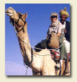 camel safari tour packages in rajasthan