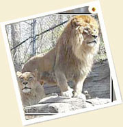 Gir National Park Tour Package in India