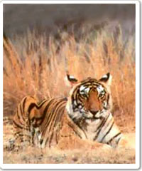 Kanha National Park Tour Package in India