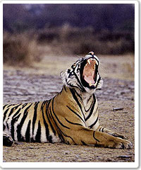 Ranthambore National Park Tour Package in India