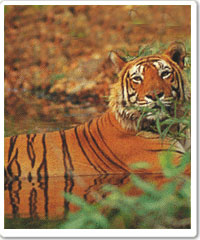 Sariska National Park Tour Package in India