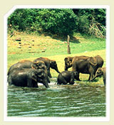 Trivandrum Tours Package