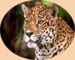 Wildlife Tour Package in India